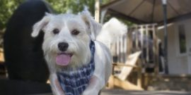 PETS | PLANTS TO AVOID PLANTING TO KEEP PETS SAFE