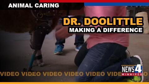 DR DOOLITTLE GRAPHIC
