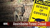 Assiniboine Forest Closed Graphic