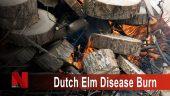 Dutch Elm Disease Burn