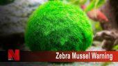 Zebral Mussel Warning