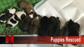 Puppies Rescued